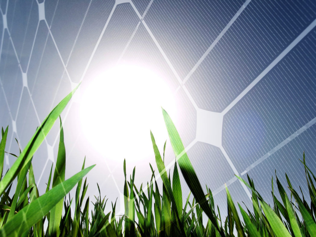 Energy Crop Photo Shutterstock