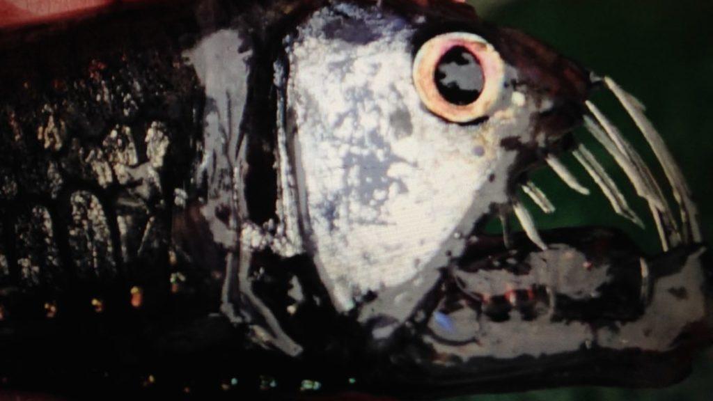 mesopelagisk fisk