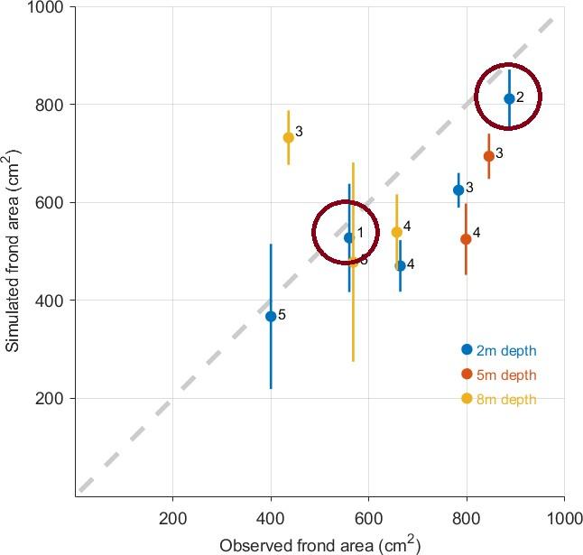 Taredyrking  Sammenligning av observert (x-akse) og simulert (y-akse) størrelse av dyrkede sukkertareplanter ved fem (1-5) lokaliteter i Trøndelag. Når punktene ligger på den stiplede linjen er det samsvar mellom simulert og obeservert gjennomsnittlig plantestørrelse ved den aktuelle målestasjonen. Lokalitetene 1 og 2 ligger ved Garten og Storfosna. Avstanden mellom dem er rundt 5 km. Figuren er tilpasset fra artikkelen https://doi.org/10.3389/fmars.2018.00529.