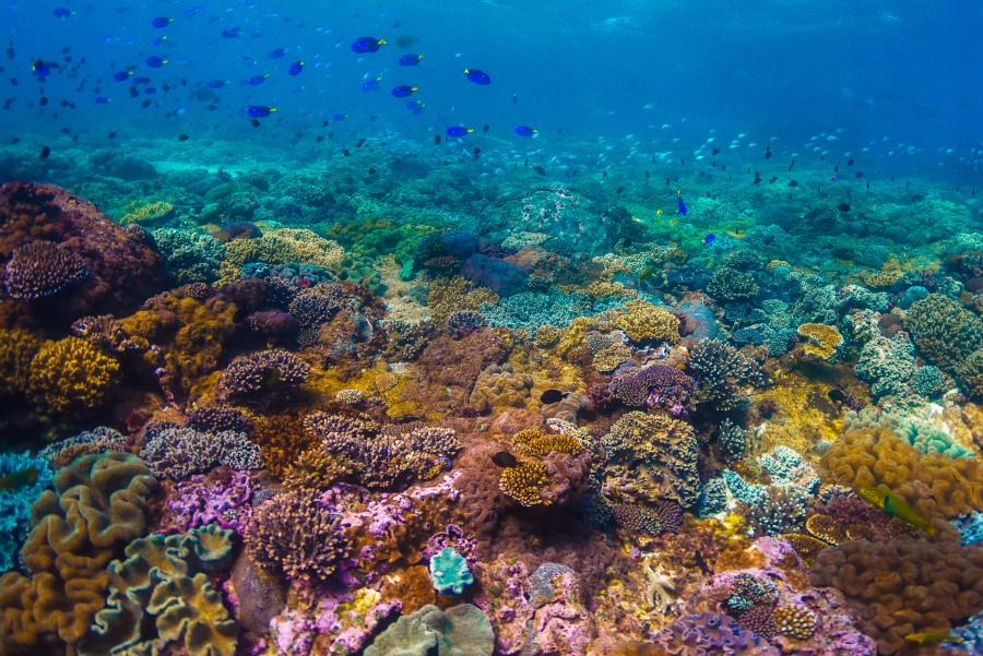 Vibrant colours of a coral reef