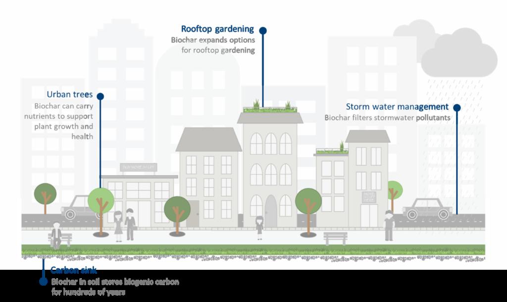 Urban green spaces as carbon sinks