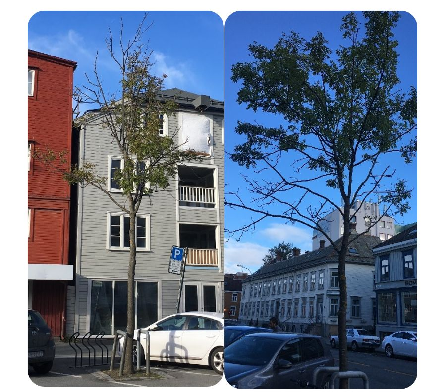 Trees in urban environments