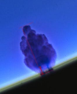Bilde av et typisk vanntre som vokser fra isolasjonsskjermen.