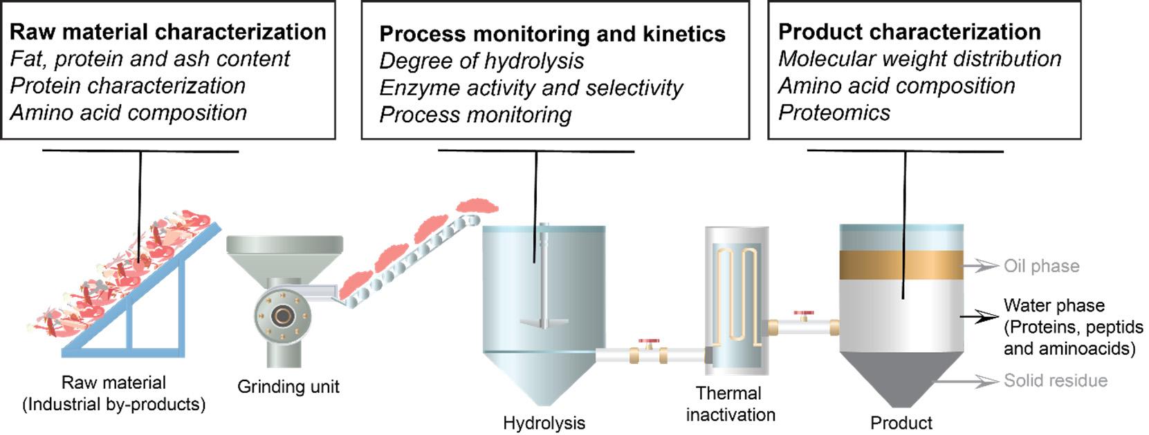 Oversikt over enzymatisk proteinhydrolyse (EPH)